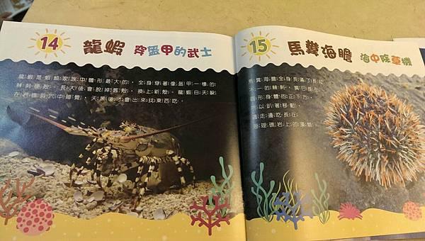 攝理教 小行星11.jpg
