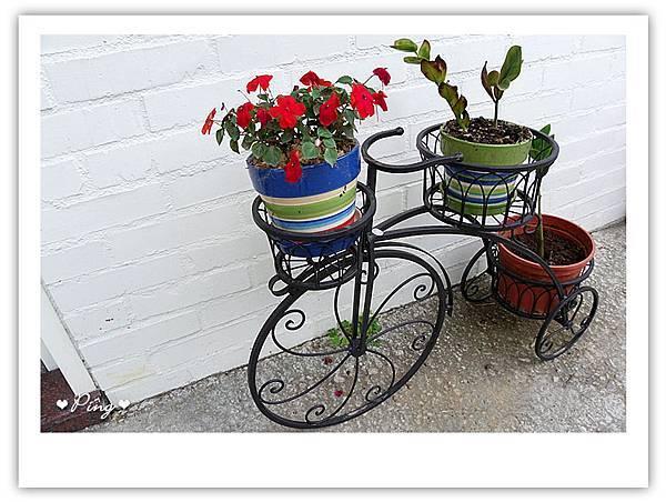 可愛的盆栽
