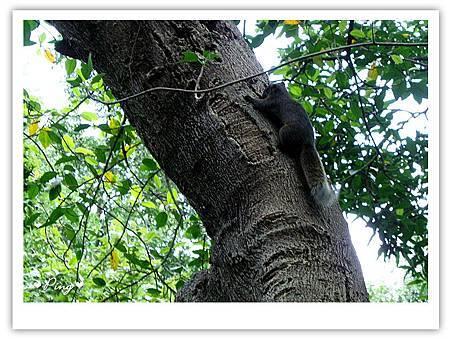 台北市植物園-松鼠.jpg