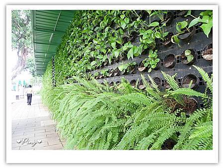 台北市植物園-途中.jpg