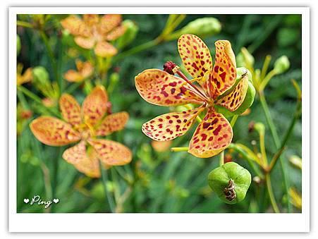 台北市植物園-花.jpg