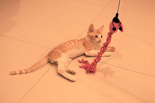 他最愛玩的逗貓棒!