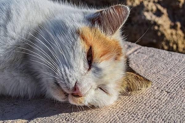 cat-2021682_640.jpg