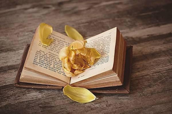 book-1291164_640.jpg