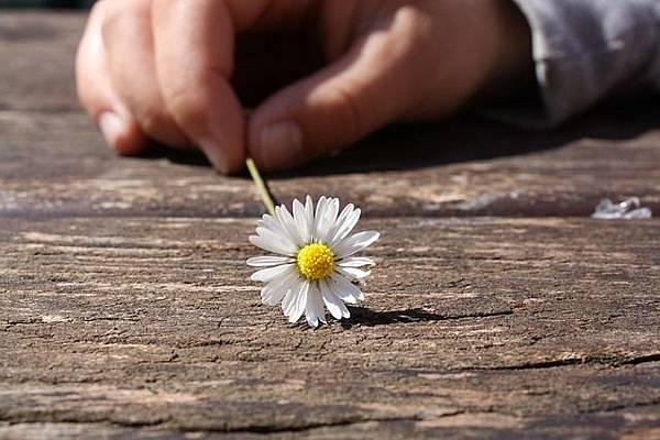 daisy-75190_640.jpg