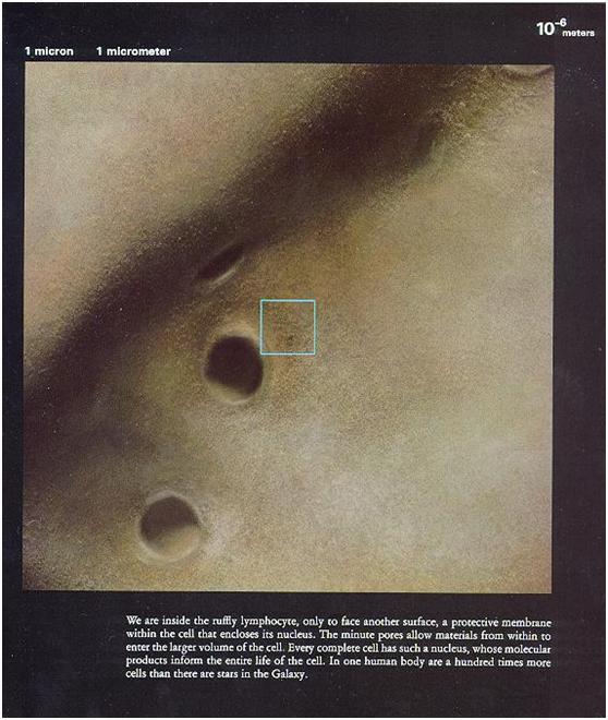 微鏡下看人體,震撼!-008