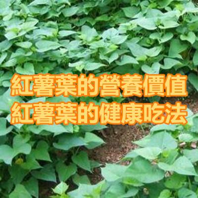 紅薯葉的營養價值 紅薯葉的健康吃法