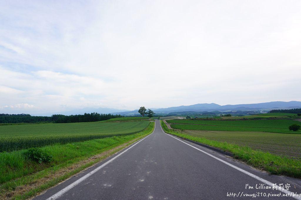 北海道自由行攻略352富田農場 四季彩之丘 富良野 美瑛.JPG
