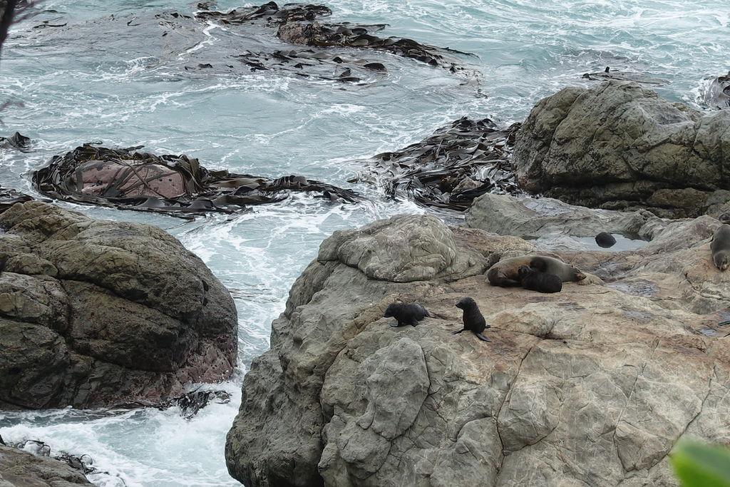 Seal Colony.JPG
