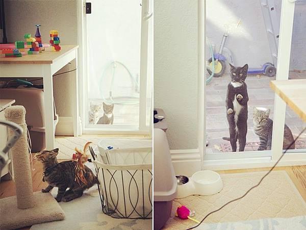 cat02.jpg
