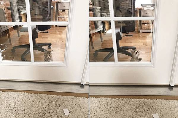 kitten011.jpg