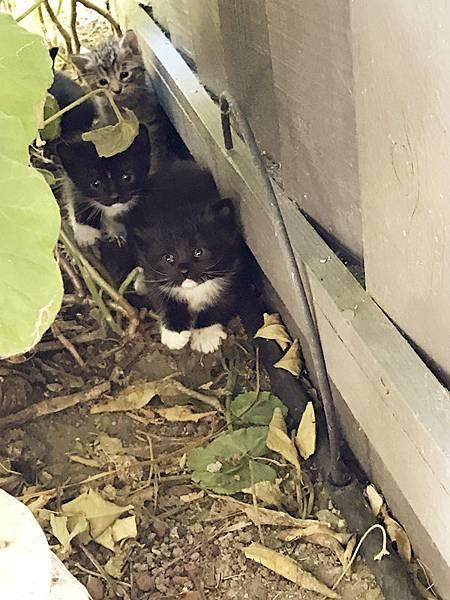 kitten008.jpg