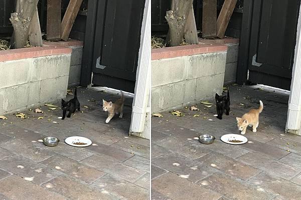 kitten018.jpg