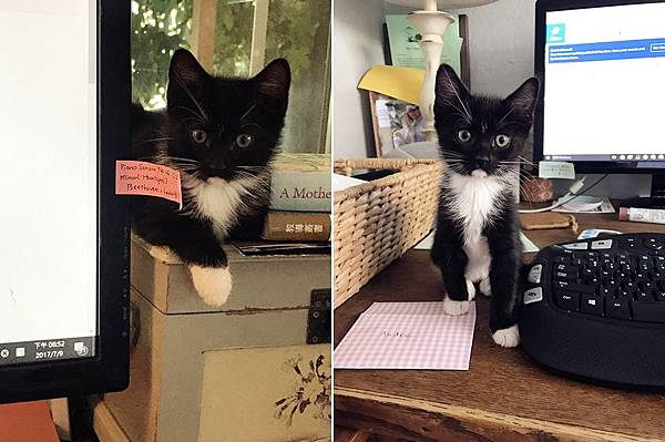kitten021.jpg