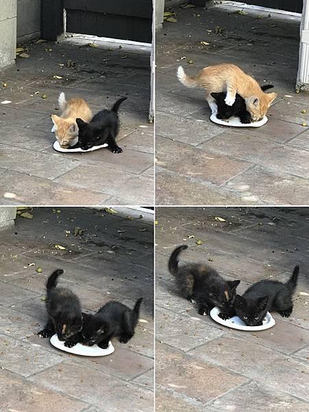 kitten017.jpg