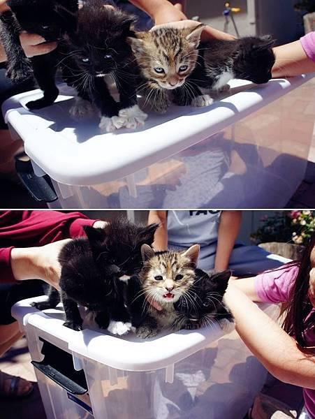 kitten002.jpg