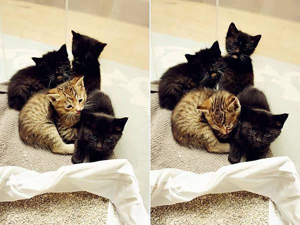 kitten004.jpg