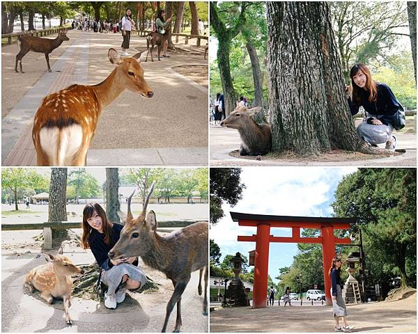 collage奈良公園.jpg