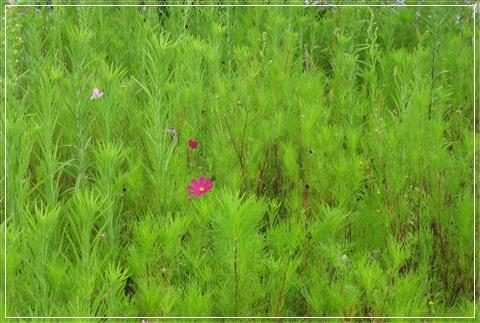20080816_名人渡假村_1.jpg