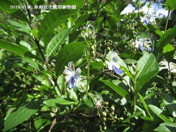 台東 卑南植物園.JPG