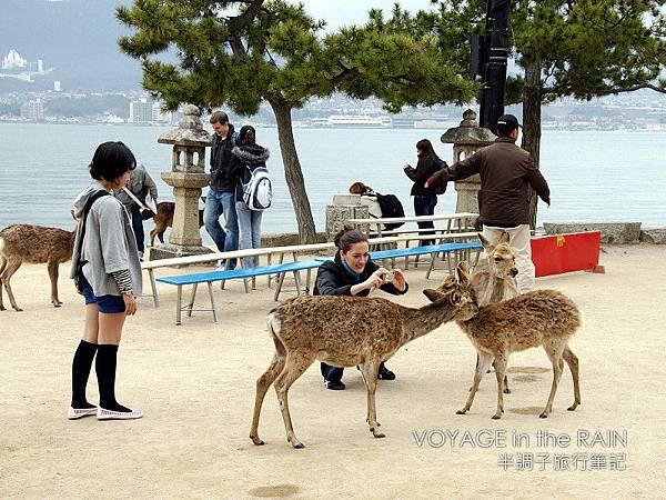 超可愛的鹿