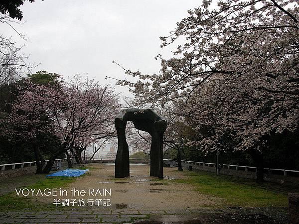 雨天稀稀落落的櫻樹