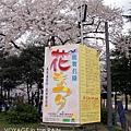 鶴舞公園櫻花祭