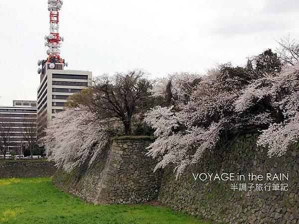 城牆上的櫻樹