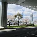 機場外的櫻花