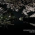 護城河兩岸的櫻花