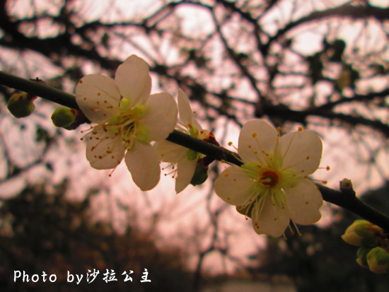IMG_5634.jpg