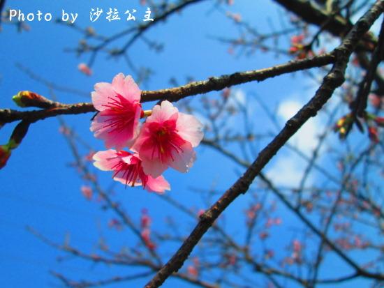 IMG_5853.jpg