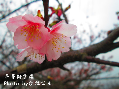 IMG_5921.jpg