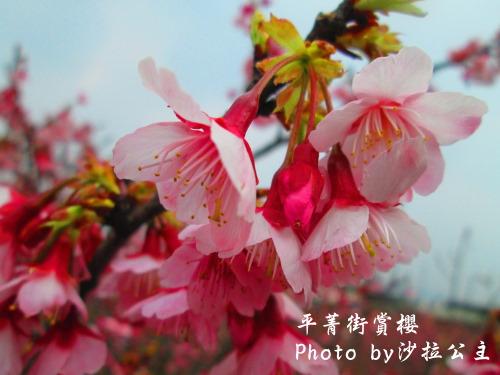 IMG_5935.jpg
