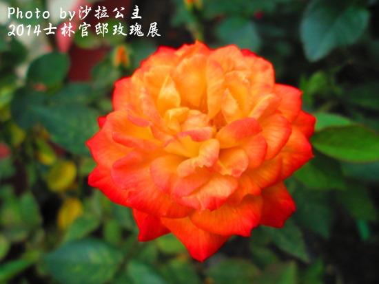 IMG_7782.jpg