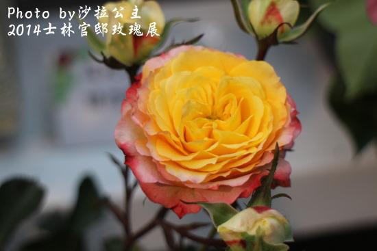 IMG_6950.JPG