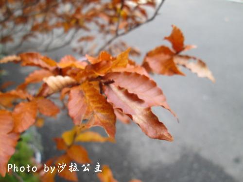 IMG_3080.jpg