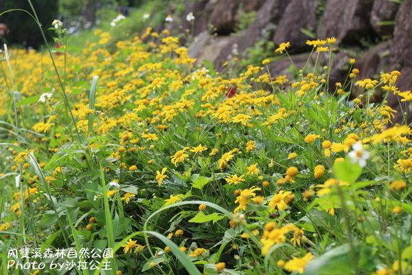 內雙溪森林自然公園:士林-內雙溪自然中心(免費參觀)