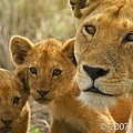 獅子.jpg