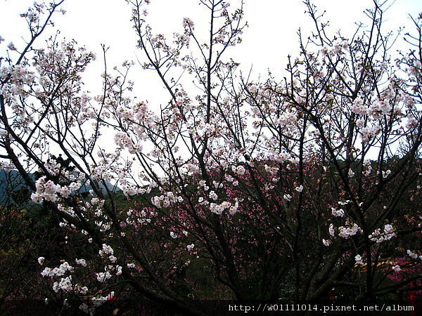 IMG_9208.JPG
