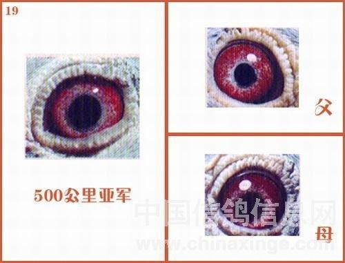 EK2653UMKLI5puLGxh9DMw1.jpg