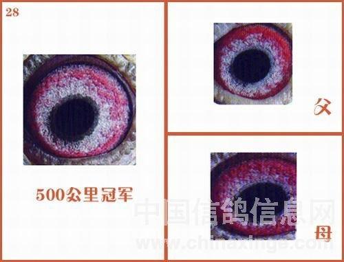 LcXifAoXCzNx51yCthhyDA27.jpg