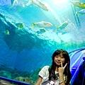 花蓮海洋公園 (36)