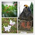 鳳凰谷鳥園 (3).jpg