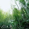 鳳凰谷鳥園 (10).JPG