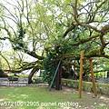 羅望子生態教育農場 (2).JPG