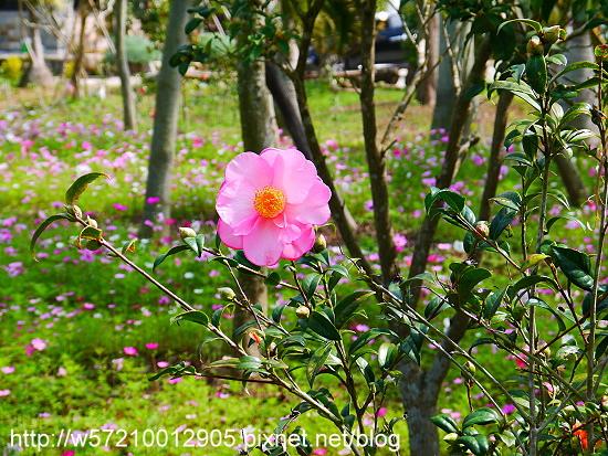 羅望子生態教育農場 (3).JPG