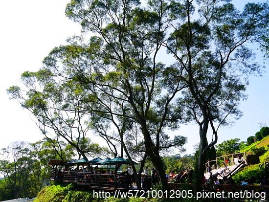 森林鳥花園.JPG