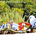 森林鳥花園 (1).JPG