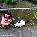 侯硐貓村 (15).JPG